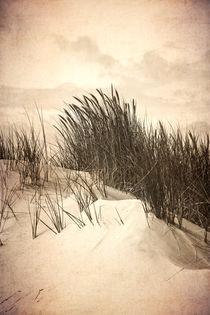 Dune by sternbild