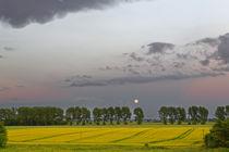 Mondaufgang über einer Baumallee by ropo13
