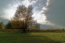 Baum im Licht by ropo13