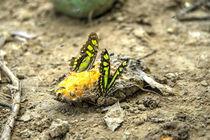 Butterfly Feast von Rob Hawkins
