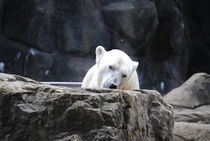 Polar Bear 2, 2017