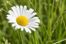 Flowers 075117 by Mario Fichtner