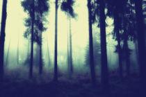 böhmische wälder 6 by micha gruenberg