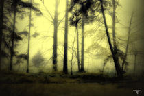 böhmische wälder 5 von micha gruenberg