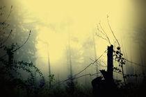 böhmische wälder 4 von micha gruenberg