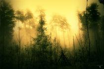 böhmische wälder 3 von micha gruenberg