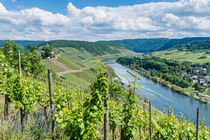 Mosel bei Pünderich 46 by Erhard Hess