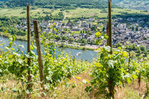 Mosel bei Pünderich 50 by Erhard Hess
