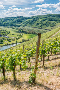 Mosel bei Pünderich 54 by Erhard Hess