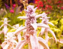 Botanische Trolle. von Zarahzeta ®