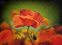 Poppy flower by Galyna Schaefer
