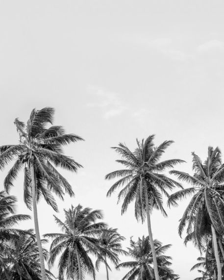 Palm-trees-01