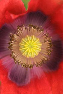 Die Mitte der Blüte by Bernhard Kaiser