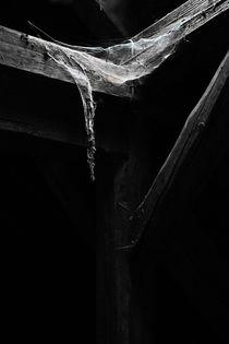 Spinnenweben by André Schuckert