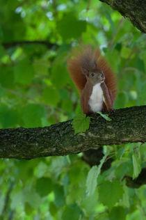 Eichhörnchen im Baum by bilderharmonie