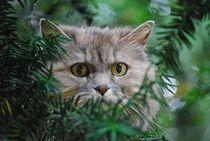 'Katze im Baum... 1' von loewenherz-artwork