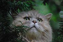 'Katze im Baum... 3' von loewenherz-artwork