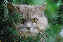 'Katze im Baum... 2' von loewenherz-artwork