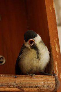 Trällernder Kohlmeisenjungvogel; 28.06.2017 von Anja  Bagunk
