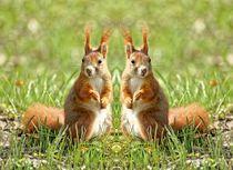 Rote Eichhörnchen Zwillinge von kattobello