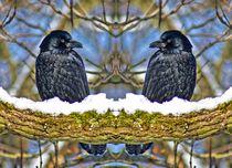 Raben Zwillinge im Winter by kattobello