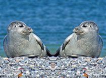 Robben Zwillinge von kattobello