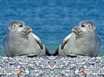 Robben Zwillinge by kattobello