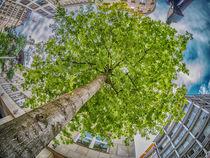 my tree von kerliham-foto