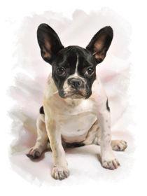 Little French Bulldog by Elena Oglezneva