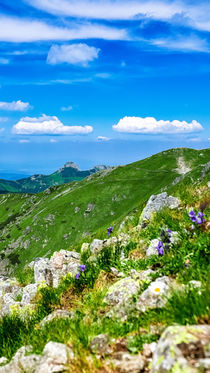 View on Giewont at Polish West Tatras in Summer by Tomas Gregor