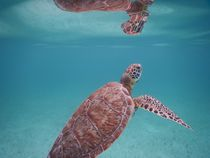Perfect turtle by travel-sc