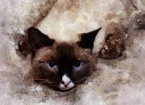 my favorite cat by Elena Oglezneva