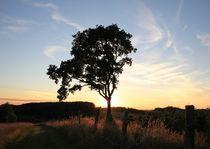 Bäume 1 von Regina Raaf