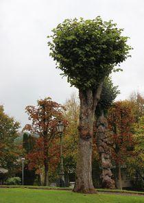 Bäume 2 von Regina Raaf