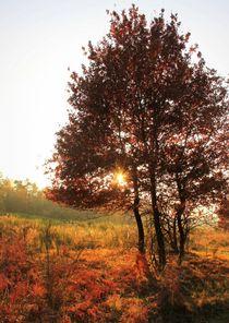 Bäume 4 von Regina Raaf