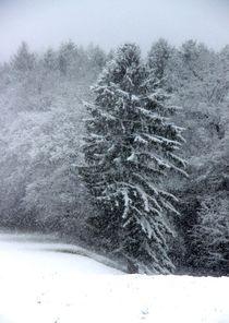 Bäume 8 von Regina Raaf
