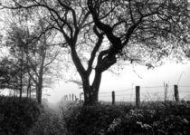 Bäume 9 by Regina Raaf