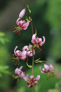 'Lilienblüten' von Bernhard Kaiser