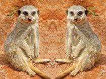 Erdmännchen Zwillinge von kattobello