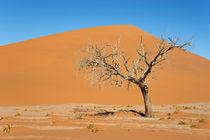 Namib-Wüste von Frauke Scholz