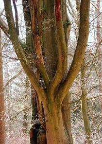 Bäume 11 von Regina Raaf