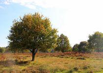 Bäume 12 von Regina Raaf