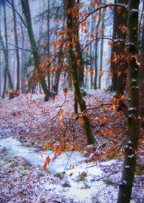 Bäume 17 by Regina Raaf