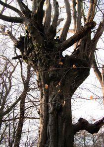 Bäume 18 von Regina Raaf