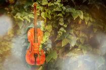 Geige im Grünen von Christiane Calmbacher