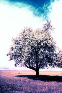 Infrared Tree von dag