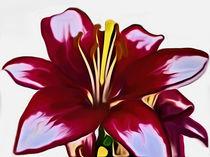 'Lily (Digital Art)' von John Wain