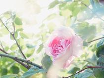 Sunshine by Andrei Grigorev