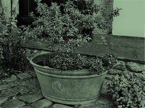 alte Zinkwanne als Pflanztopf in altgrün by assy