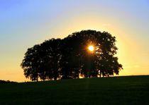 Bäume 19 by Regina Raaf